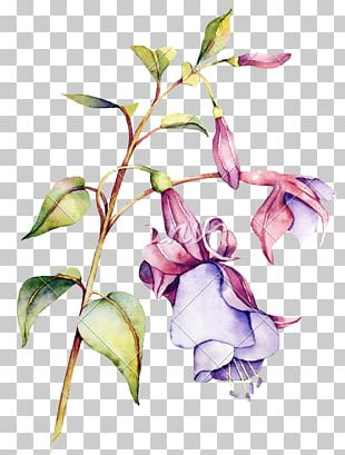 Watercolor Painting Flower Floral Design PNG