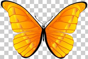 Butterfly Orange PNG