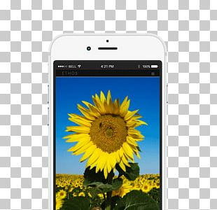 Smartphone Bee Mobile Phone Accessories Sunflower M Text Messaging PNG