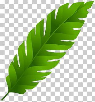 Banana Leaf Palm-leaf Manuscript PNG