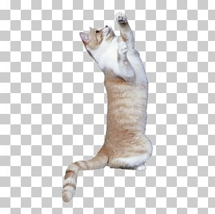 Cat Tree Kitten Dog Mouse PNG