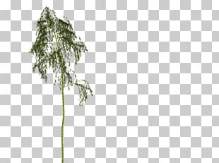 Bamboo Woody Plant Tree Plant Stem PNG