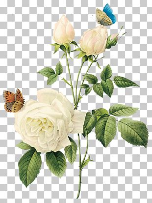 Rose Flower White PNG