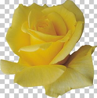 Petal Flower Yellow PNG