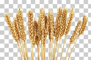 Cereal Wheat Grain PNG