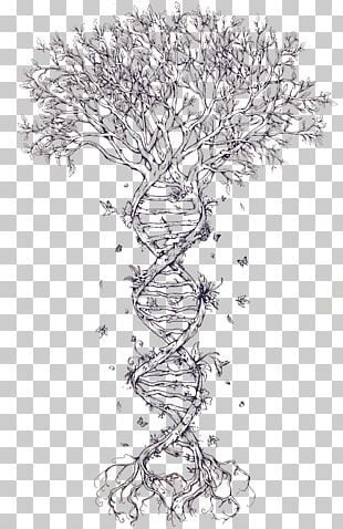 Family Tree DNA Tattoo Family Tree DNA Nucleic Acid Double Helix PNG