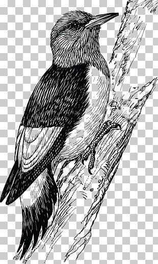 Woodpecker Penguin Bird PNG