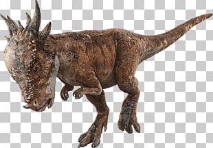 Velociraptor Jurassic World Evolution Pachycephalosaurus Stygimoloch Jurassic Park PNG