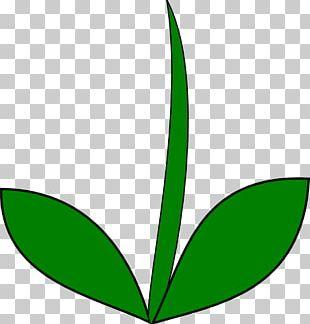 Plant Stem Flower Leaf PNG