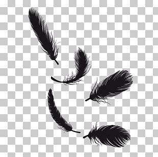 Feather Tail Pen PNG