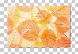 Stock Photography PNG
