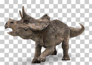 Baby Triceratops Tyrannosaurus Jurassic Park Dinosaur PNG