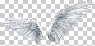 Wing Butterfly Angel PNG