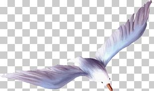 Wing Feather Purple Beak PNG