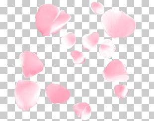 Petal Flower Beach Rose Google S PNG