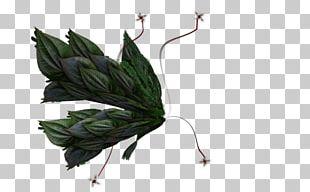 Digital Art 12 February PNG