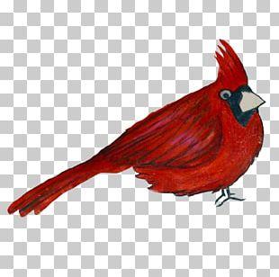 Galliformes Fauna Beak Feather PNG