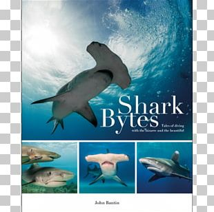 Shark Bytes: Tales Of Diving With The Bizarre And The Beautiful Common Bottlenose Dolphin Amazing Diving Stories: Incredible Tales From Deep Beneath The Sea Wholphin PNG