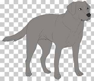 Labrador Retriever Puppy Dog Breed German Shepherd Border Collie PNG