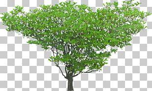 Shrub Tree Macizos De Flores Plant PNG