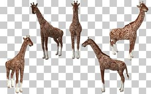 Spore Creatures Reticulated Giraffe Animal Deer PNG