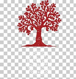 Cecchetti Wine Company Cabernet Sauvignon Pinot Noir Sauvignon Blanc PNG