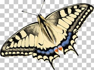 Monarch Butterfly Moth Brush-footed Butterflies Drawing PNG