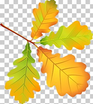 Leaf Autumn Leaves Oak PNG