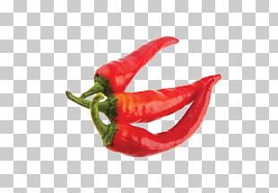 Chile De árbol Piquillo Pepper Bird's Eye Chili Serrano Pepper Tabasco Pepper PNG