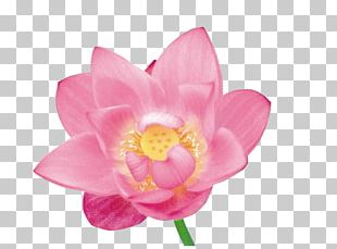 Flower Petal Stock Photography PNG