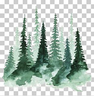 Study Of A Tree Watercolor Painting Pine PNG