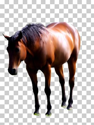 American Paint Horse Andalusian Horse Mustang Foal Stallion PNG