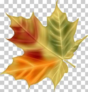 Digital Painting Leaf PNG