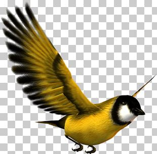 Finches Bird Eurasian Magpie Atlantic Canary Sparrow PNG