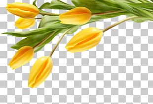 The Black Tulip Desktop Flower Yellow PNG