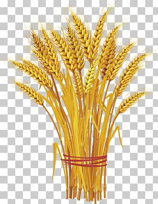 Like A Bundle Of Reeds: Why Unity And Mutual Guarantee Are Today's Call Of The Hour Wheat PNG