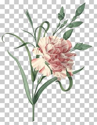 Carnation Choix Des Plus Belles Fleurs Flower Engraving Vintage Clothing PNG
