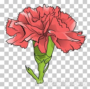 Carnation Floral Design Garden Roses Cut Flowers PNG