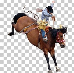 Miles City Bucking Horse Sale Rodeo Bronc Riding PNG