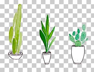 Plant Drawing Watercolor Painting Cactaceae PNG