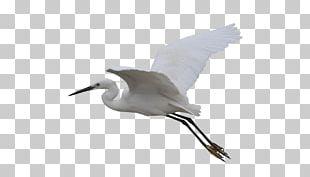 Seabird Crane Wader Beak PNG