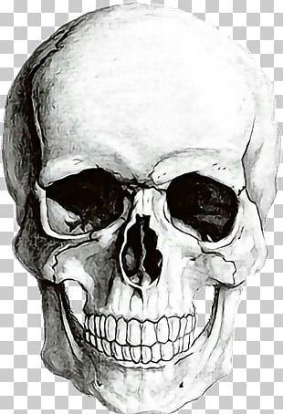 Human Skull Symbolism Human Skeleton Drawing PNG