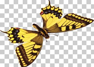 Monarch Butterfly Insect Moth PNG