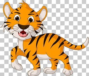 Tiger Cartoon Drawing Illustration PNG