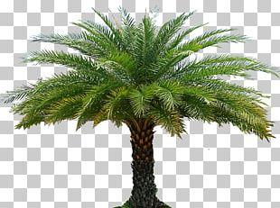 Tree Arecaceae Garden Landscape Architecture Forest PNG