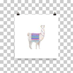 Product Design Camel Mammal PNG