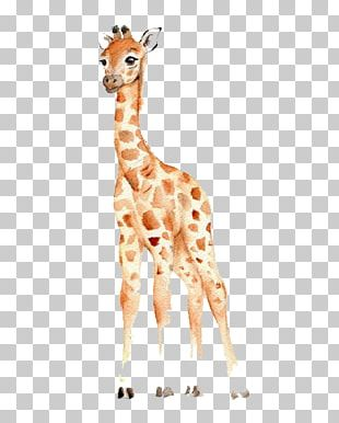 West African Giraffe Watercolor Painting Drawing Nursery PNG