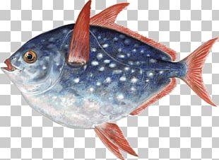 Thunnus Fish Products Marine Biology Oily Fish Sardine PNG