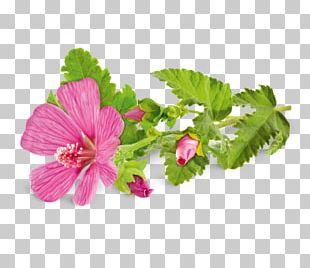 Medicinal Plants Hollyhocks Malva Sylvestris Malva Pudding PNG