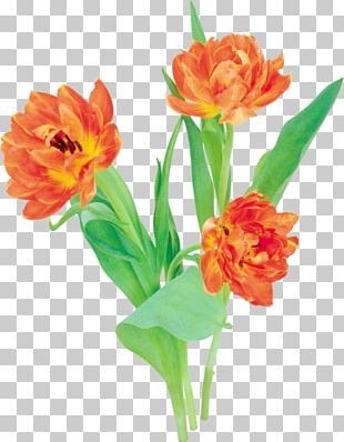 Floral Design Tulip Cut Flowers PNG